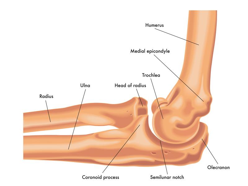 Distal Humerus Radial Head Olecranon Coronoid Fracture Elbow Fractures
